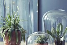 Glass Dome Bell Cloche Jars / Simple and easy ways to style your glass dome cloche bell jars. Whether they are being used as a centrepiece for a event or weddings, an addition of victorian inspired sparkle to your home or a gorgeous gift this versatile homeware trend shows no sign of shifting!