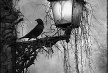 Halloween / by Denise van Riet