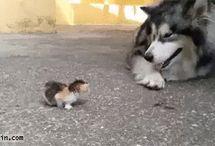 Hayvanlar / Çok sevimli