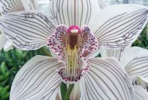 orchid inspiration
