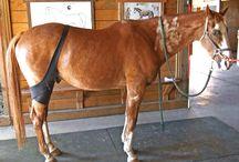 Equine Therapies