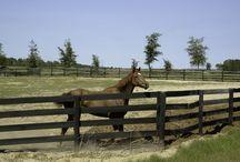 Ocala Florida Horse Training Facility For Sale / 357+/- Acre Williston, Levy County, Florida