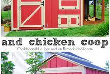 chicken ideas / chicken coops