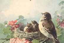 Vintage postcard animals