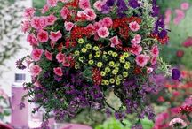 mikes hanging baskets / by Doris Sprouse