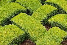 gardens/ zahrady