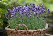 Rural and rustic container gardens
