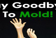 Chicago Mold Inspection / by Jocelyn