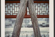 Voyages en Chine / À l'occasion du nouvel an chinois, nous avons souhaité explorer le travail de Michel Delaborde qui, lors de deux voyages au début des années quatre-vingts, juste après la mort de Mao, posa un regard sur « la Chine de toujours telle qu'elle apparaissait encore ». Michel Delaborde (1935-2009) mena de front sa carrière de haut fonctionnaire et son travail de photographe. Les photographies ramenées de ces voyages donnèrent lieu à plusieurs expositions entre 1983 et 2004.