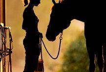 Photo - posing (Horse)