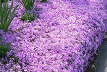 Giardino piante e fiori perenni