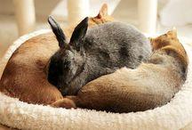 Kaniner og venner