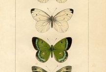 Motyle w bibliotece