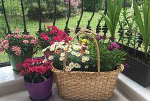 Balkon ve bahçe dekorasyon fikirleri / Balkon ve bahçeler için yaratıcı dekorasyon fikirleri