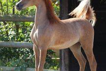 Horses ❤️❤️