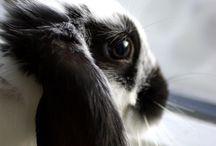 Bunnies / The delightful world of bunnies. / by Carol Kuhfahl