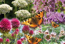 insekter i haven