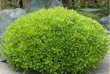 plantes pour jardin