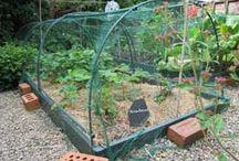 vetgetable gardening