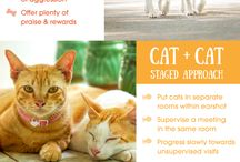 Cats and Dogs / This board focuses on welcoming a new pet home, introductions to current pets in the home, importance of veterinary care and pet facts.