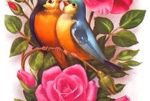 kuşlarım