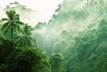 Tropicalove