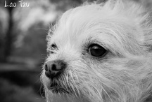 The Official Mr. Bojangles / This is the board for all things Mr. Bojangles. You can find him on Facebook (https://www.facebook.com/OfficialMrBojangles). He is a cute chihuahua/cairn terrier mix who practices Doglosophy and LOVEST giving kisses!