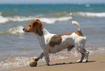 Vacation Dog Checklist