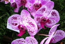 Orchids / by Lissa Coffey