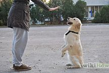 "Dogs, their training and world / Everything about ""man's Best friend"""