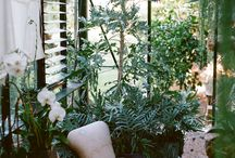 Patios / Plants and other ideas for my dreamed patio