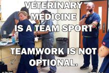 VET RECEPTIONISTS RULE