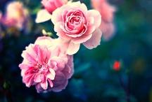 Baharın Renkleri  / Baharın gelmesiyle birlikte doğa tüm renklerini giyindi :)
