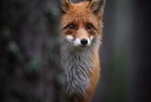 Animals / by Author Lynn Hubbard