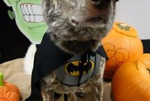 Halloween Dog Party / Halloween Costume Party at Pawsitively Pooched Doggie Daycare, Grooming & Hydrotherapy