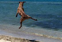 Hunde und Naturschutz / Da ich selber einen Tierschutzhund bei mir aufgenommen habe, interessiere ich mich für die Arbeit der Vereine, ziehe meinen Hut vor den Aufgaben und Strapazen und dem Elend und setze mich hin und wieder im kleinen (mit einer Spende) auch für den Auslandstierschutz ein. Auch Naturschutz allgemein ist mir wichtig, ich möchte nicht, dass die Arktis durchbohrt wird oder wir mit Kohlekraft heizen.