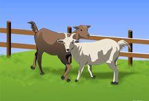 Criação de Cabras e Ovelhas. / Dicas e pesquisa sobre a criação de cabras e ovelhas.
