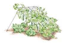 know how / gardening