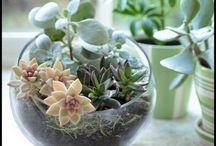 indoor arrangements