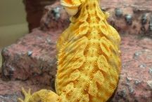 Bearded Dragons / by Molly LaBelle