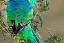 GOD'S BEAUTIFUL  CREATION / by Gail Payne