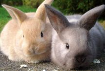 Conigli/Rabbits