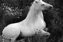 Unicorns / by Jenni Sanzotera
