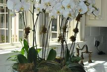 camelias y orquideas