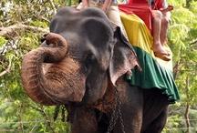 Sri Lanka / travel