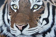 beautiful- tigers