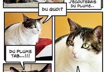 Chats et compagnie