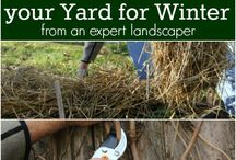 seasonal lawn and house care