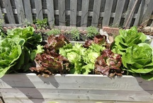My Vegetable Garden 2012 / Gardening is my passion. Eating organic food is a choice. I chose to plant my own food and be self sufficient.