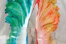 forsøk med farger